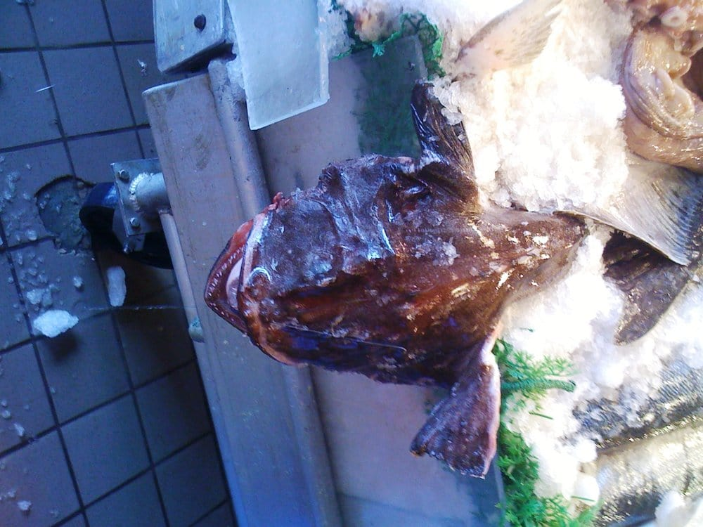 Giant Monk Fish At Pike Place Market Yelp