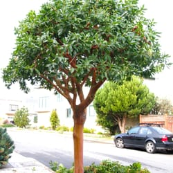 City Trees - 10 Photos & 19 Reviews - Tree Services - Noe Valley