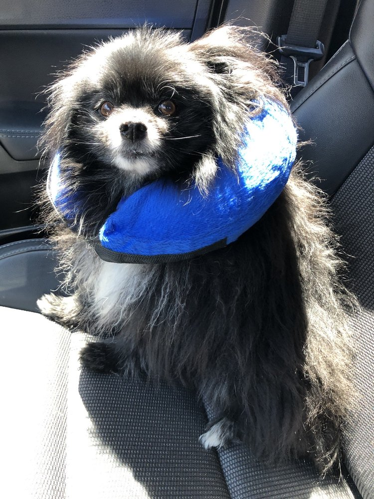 Daisy Mountain Veterinary Hospital: 39508 N Daisy Mountain Dr, Anthem, AZ