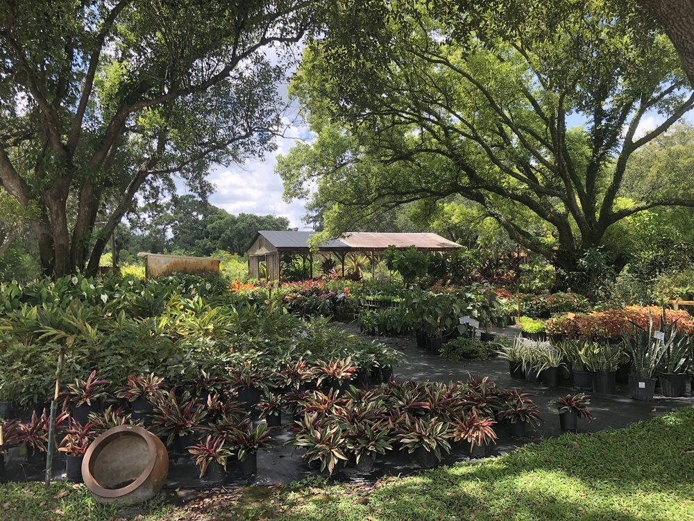 South Seminole Farm & Nursery: 2010 Lake Dr, Casselberry, FL