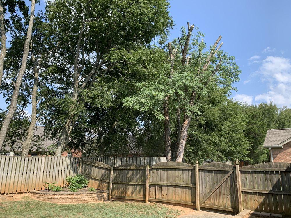 JB Tree Service: 284 Jefferson Pike, La Vergne, TN