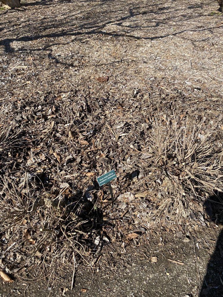 Quiet Garden: Arboretum Way, Shepherdsville, KY