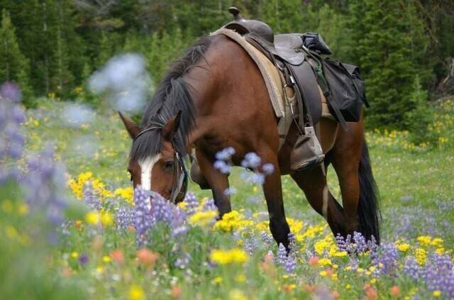 Forest Highlands: 2425 William Palmer, Flagstaff, AZ