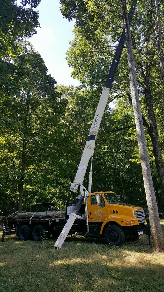 Cypress Tree Service: Byram Township, NJ
