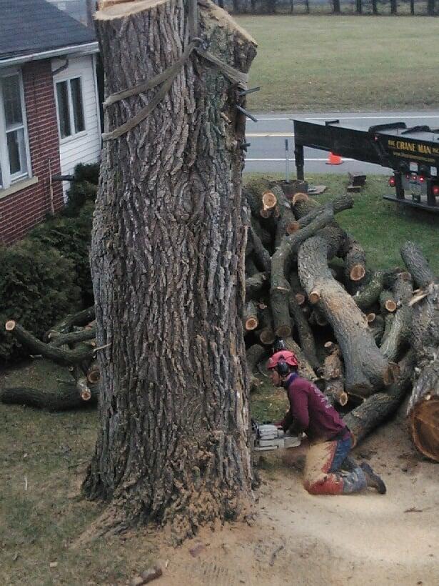 Jacob's Professional Tree & Shrub Care: 743 Center St, Bethlehem, PA