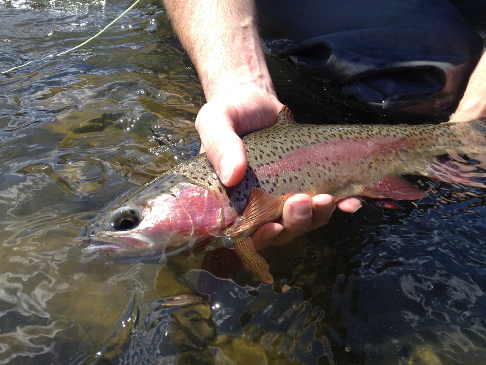 All Waters Angling: Maupin, OR