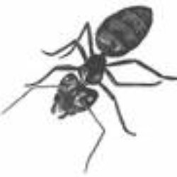Kwik Kill Pest Control 13 Reviews Pest Control 7993