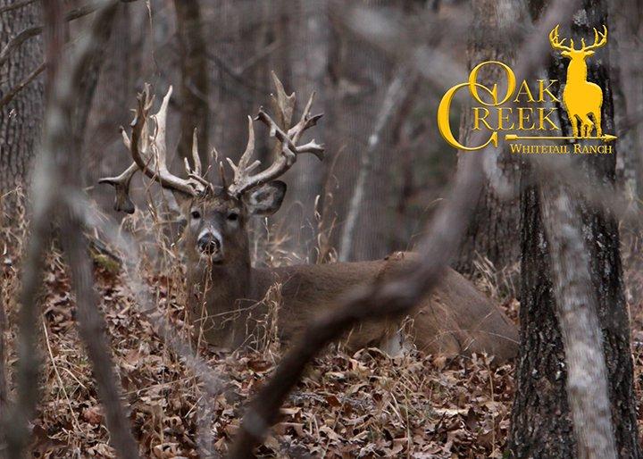 Oak Creek Whitetail Ranch: 178 Oak Creek Ln, Bland, MO