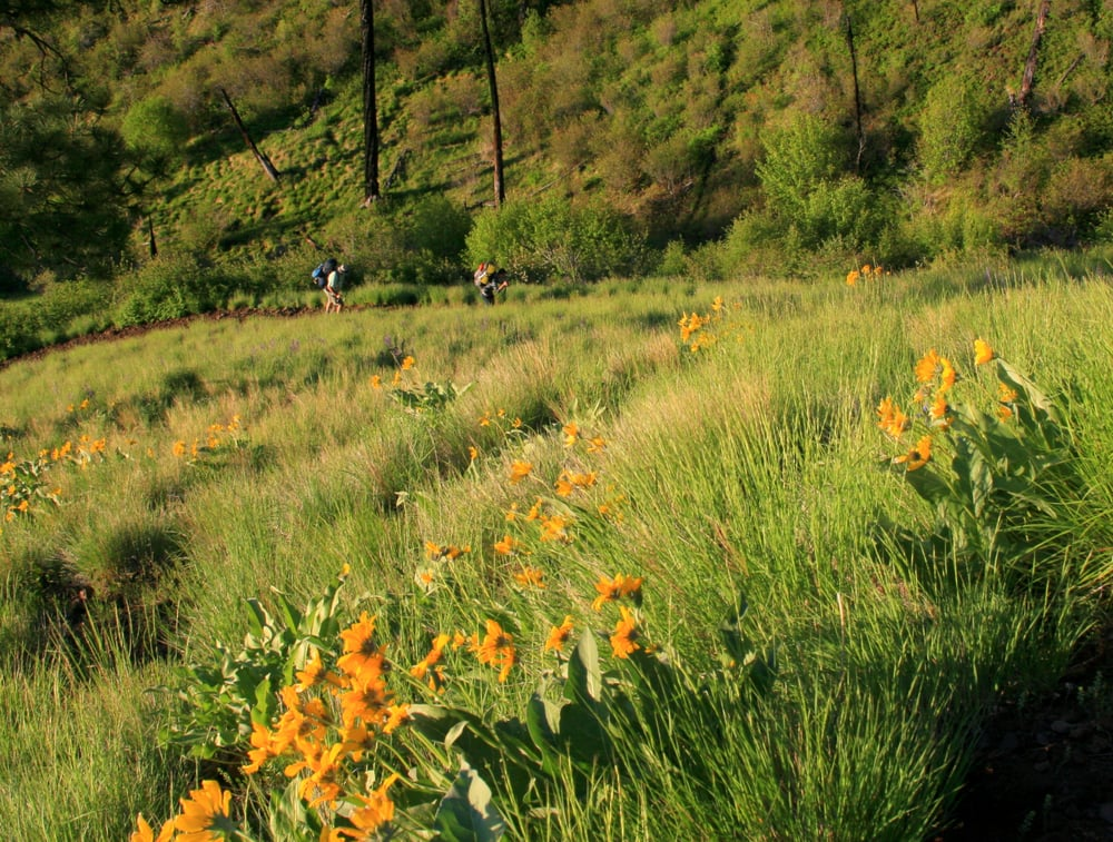 Hells Canyon National Recreation Area: 201 E Second St, Wallowa, OR