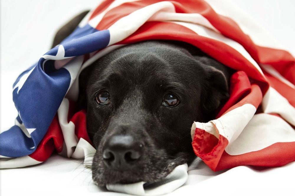 Dog Guard of Memphis: 2670 Roland Rd, Arlington, TN