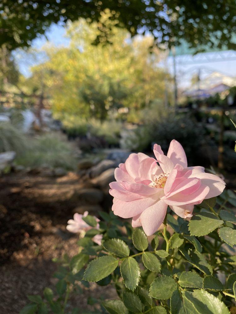 Trifilo Garden Center: 88 CA-4, Murphys, CA