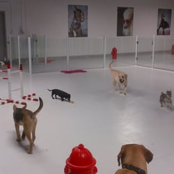 Photo Of Luxe Pet Hotels Las Vegas Nv United States Indoor
