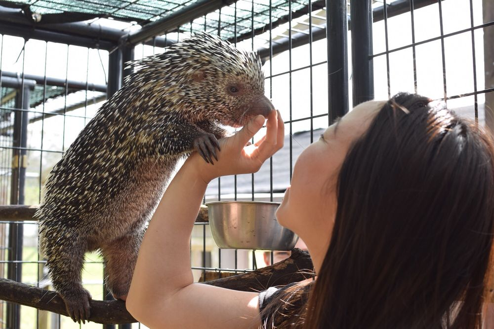 Exotic Animal Experience: Orlando, FL