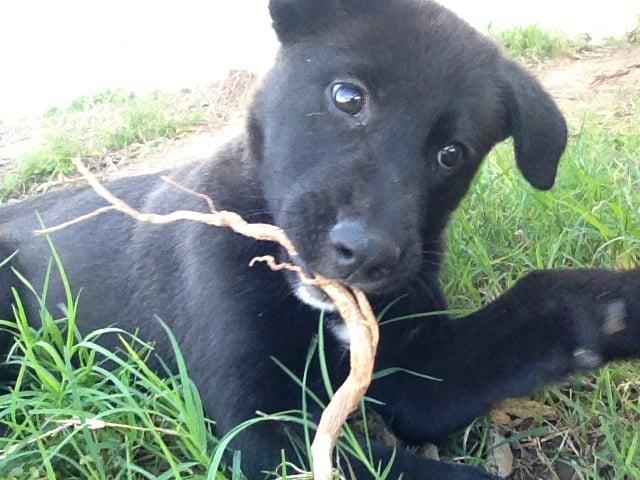 Humane Society Animal Shelter: 4360 Old Iowa Park Rd, Wichita Falls, TX