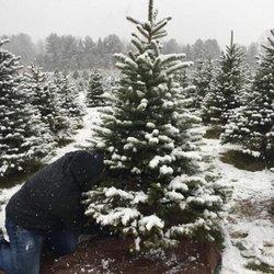 Photo Of Stumpfu0027s U Cut Christmas Tree Farm   Cedarburg, WI, United States.
