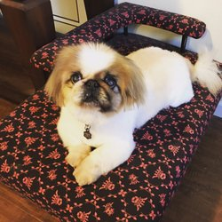 Shaved japanese chin