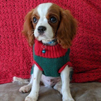 Hello Puppies - 35 Photos & 54 Reviews - Pet Breeders