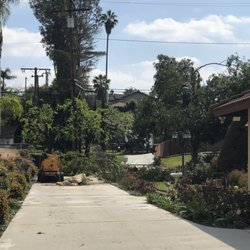 Nature's Tree Service - 10 Photos & 20 Reviews - Tree Services