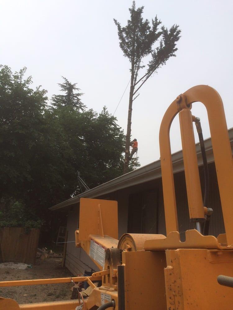 Artisan Tree Care: Ashland, OR