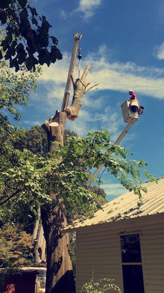 Tree Pro: Killen, AL