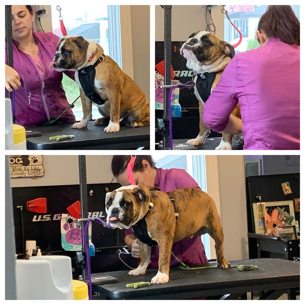 posh paws Pet Parlor: 1495 W Court St, Kankakee, IL