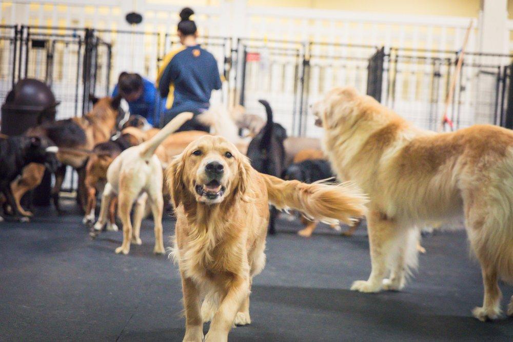 Dog Day Care Near Alexandria Va