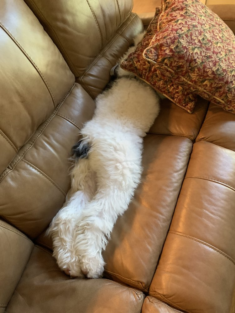 Tails of Winston Pet Sitting: Advance, NC
