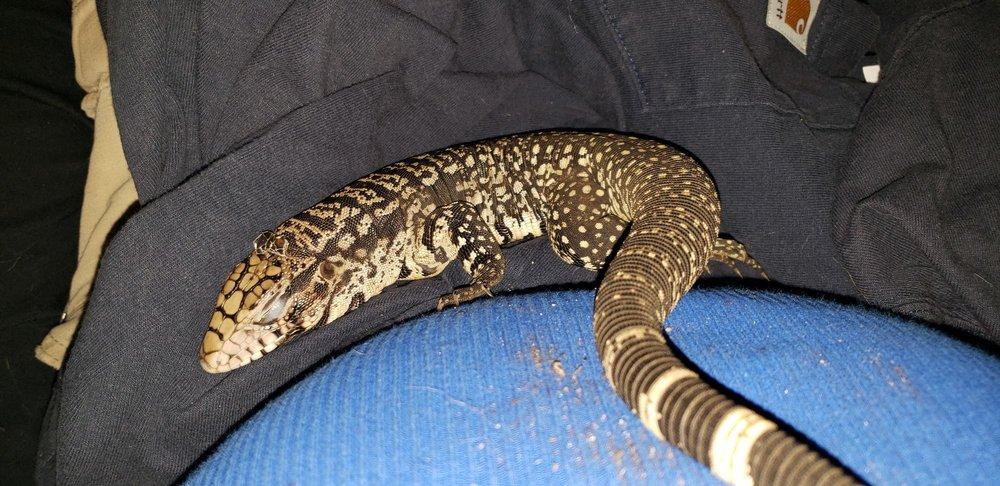 Ron's Reptiles