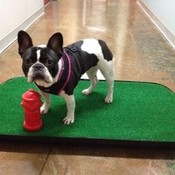 Go-Doggy-Go Indoor Dog Potty - Pet Training - 420 S San Pedro St ...