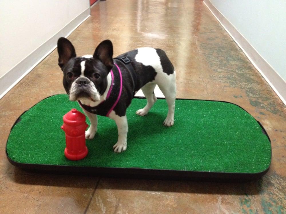 Trouble Potty Training Dog