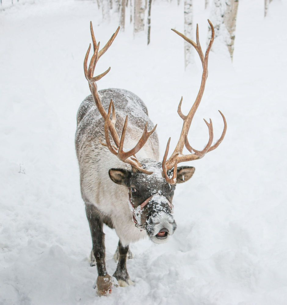 Social Spots from Running Reindeer Ranch