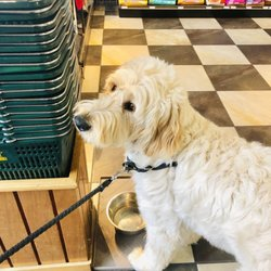 Mud Bay - 10 Photos & 69 Reviews - Pet Stores - 8532 1st Ave NW