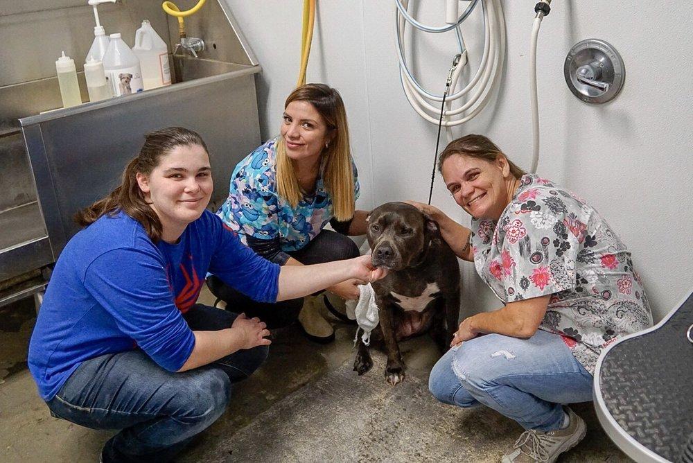iPaw Pet Salons 46: 121 Bulverde Crossing, Bulverde, TX