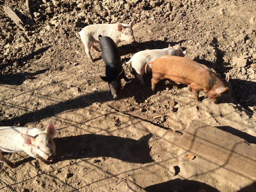 Slowpoke Farms: 709 Conrad Hilton Blvd, Cisco, TX