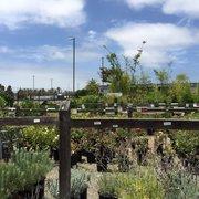 Photo Of Walter Andersen Nursery San Go Ca United States