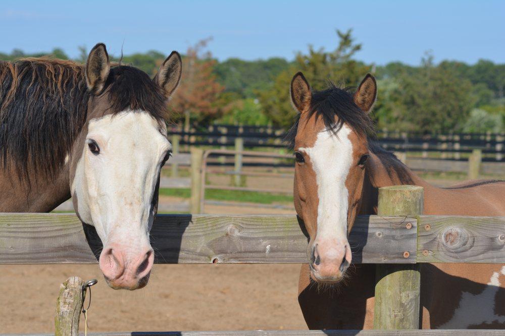 Amaryllis Farm Equine Rescue