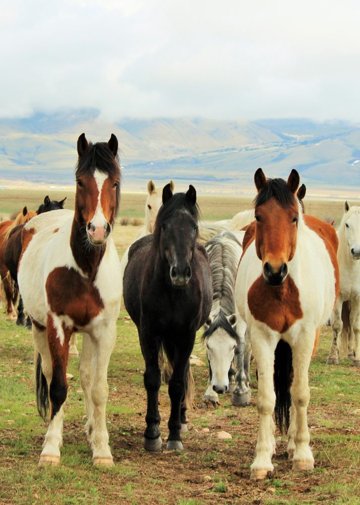 Deerwood Ranch Wild Horse Ecosanctuary: 599 State Hwy 11, Laramie, WY