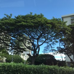 Photo Of Queen Emma Gardens Aoao   Honolulu, HI, United States. King,