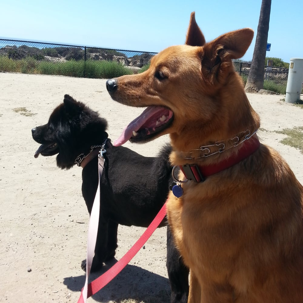 San Clemente State Park Camping: My Pups' First Time Camping And They Luv It.