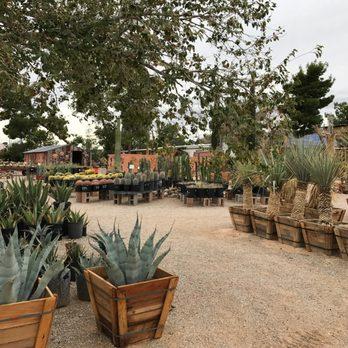Cactus Joe S Blue Diamond Nursery 203 Photos Amp 49