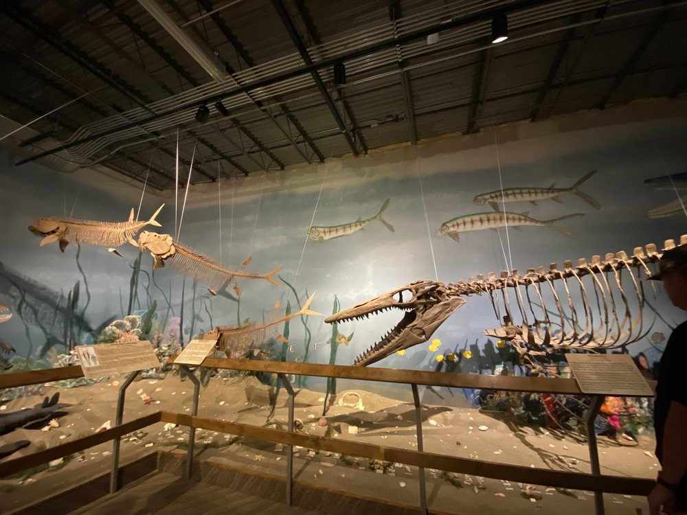 Glendive Dinosaur and Fossil Museum: 139 State St, Glendive, MT