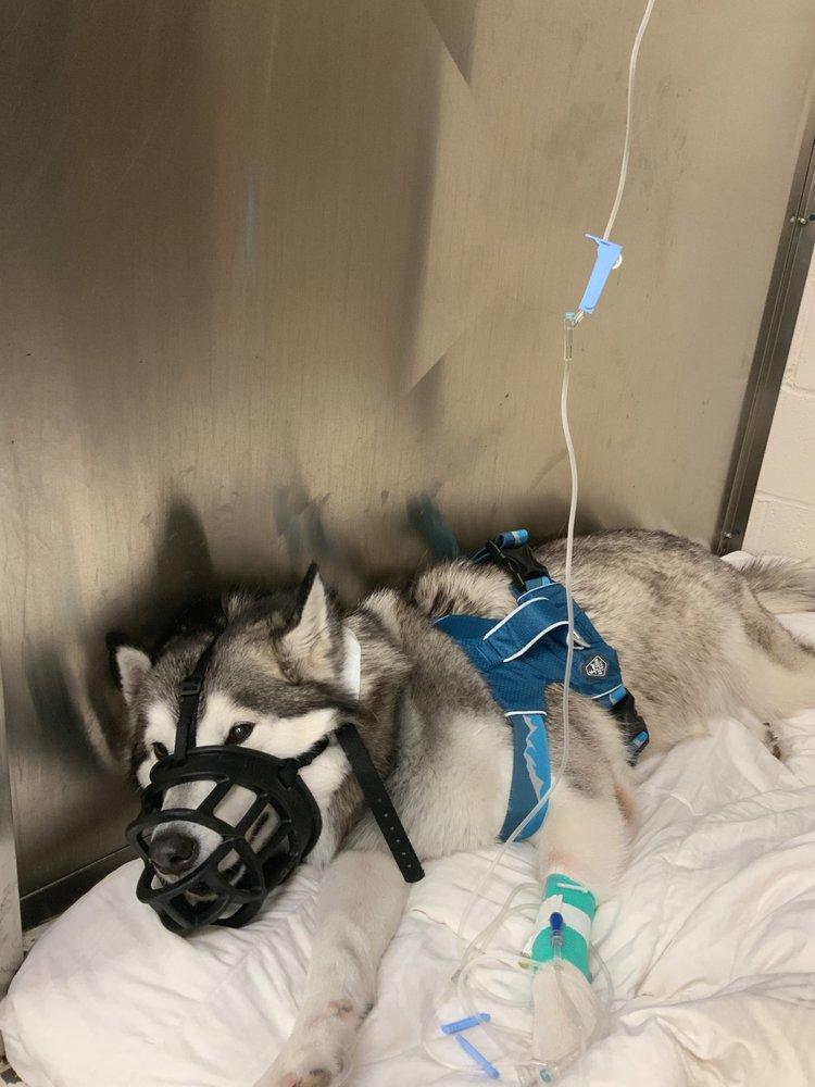 Lafayette Veterinary Care Center: 110 Perard St, Lafayette, LA
