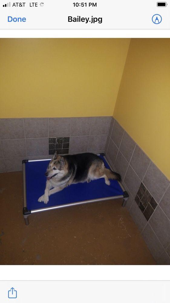 Kirkwood Bark & Lounge Doggy Daycare & Boarding: 2006 Hosea Williams Dr, Atlanta, GA
