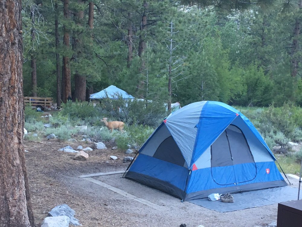 Big Pine Creek Campground: Big Pine, CA