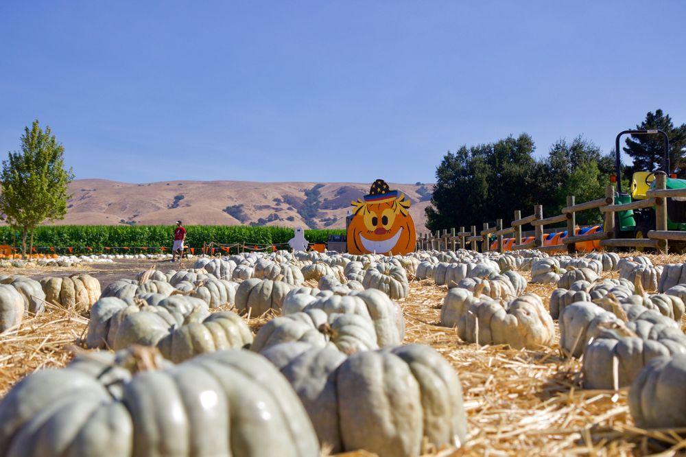 Spina Farms Pumpkin Patch: Santa Teresa Blvd, San Jose, CA