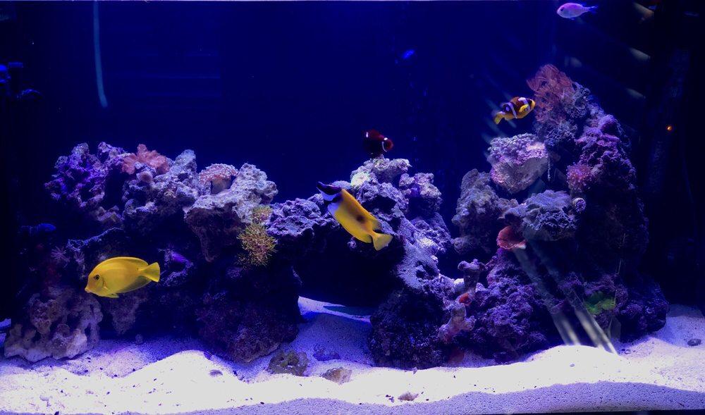 Little Oceans Aquarium Specialists: 1121 51st Ave N, Saint Petersburg, FL