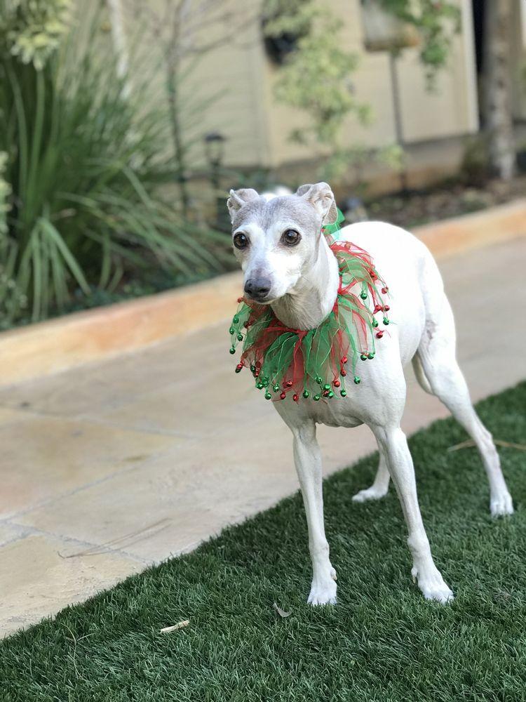Vision Care For Animals: 4073 El Camino Real, Palo Alto, CA