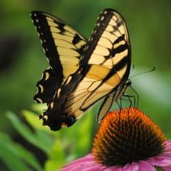 Photo Of Klehm Arboretum U0026 Botanic Garden   Rockford, IL, United States. A