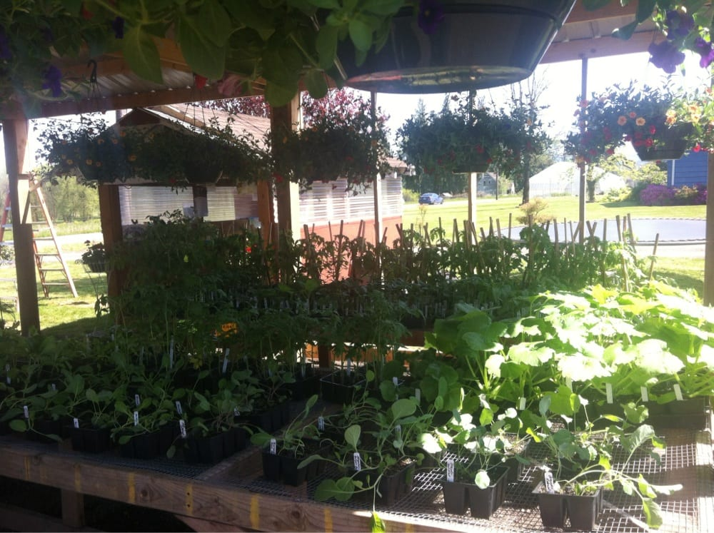Hanging Flower Baskets Vancouver Wa : Plant sale started in may hanging baskets vegetable