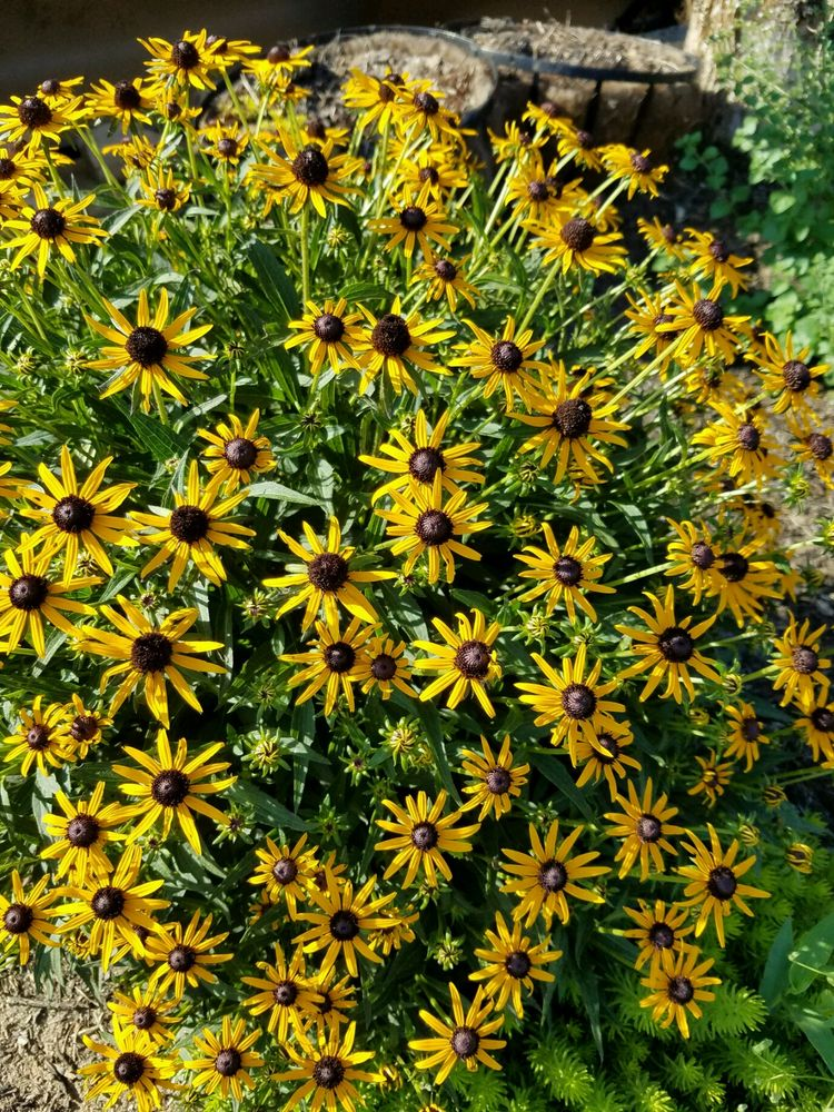Reynolda Nursery and Landscaping: 5353 Reynolda Rd, Winston Salem, NC
